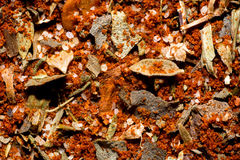 Cajun spice seasoning Royalty Free Stock Photo