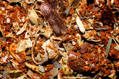 Cajun spice seasoning Royalty Free Stock Photos