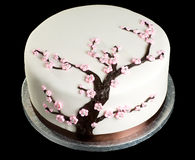 Cake on isolated black background. Close up of cake with cherry blossom on isolated black background Royalty Free Stock Photo