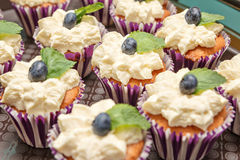 Cake med blåbäret Fotografering för Bildbyråer