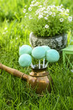 Cake pops on green grass in spring garden Stock Photography