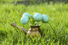 Cake pops on green grass in spring garden Stock Images