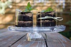 Cake van glasschotel Royalty-vrije Stock Foto's