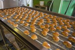 Cakes on automatic conveyor belt or line, process of baking in confectionery culinary factory or plant. breadstuff production. Cakes on automatic conveyor belt royalty free stock photos