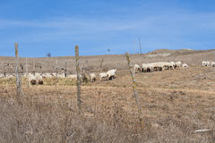 Cakla krajobraz Zdjęcie Stock