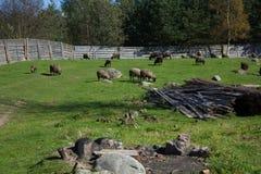 Cakle na gospodarstwie rolnym Fotografia Royalty Free
