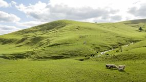 Cakle na zielonym wzgórzu obraz royalty free