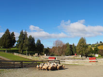 Cakle W gospodarstwie rolnym Zdjęcie Royalty Free