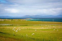 Cakle w Iona, mała wyspa w Wewnętrznym Hebrides z Ross Rozmyślam na zachodnim wybrzeżu Szkocja zdjęcie stock