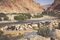 Cakle w Morocco krajobrazie Fotografia Stock