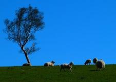 Cakle w polu na słonecznym dniu zdjęcie royalty free