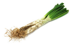 Calçots, catalan sweet onions Stock Photo