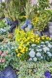 Calças longas usadas como plantadores com Sansevieria, hortênsia e narcisos amarelos fotos de stock royalty free