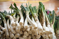 Calçots stock photos