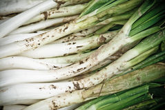 Calçots stock photography
