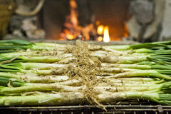 Calçots in a grill Stock Image