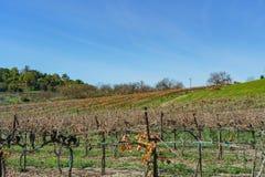 Cal多波诺马农场的外视图  库存图片