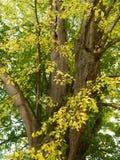 Cal con las hojas en colores otoñales Imágenes de archivo libres de regalías