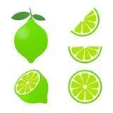 Cal con las hojas verdes, fruta cítrica de la rebanada aislada en el fondo blanco Ilustración del vector ilustración del vector
