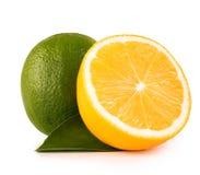 Cal e limão verdes no fundo branco foto de stock royalty free