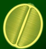 Cal fresca en una sección longitudinal en un fondo verde Foto de archivo