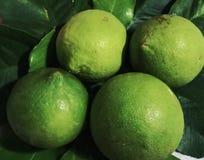 Cal, verão verde minha vida verde Fotos de Stock