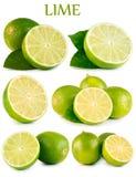 Cal verde ajustado no fundo branco fotos de stock