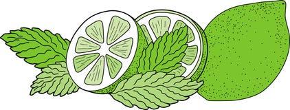 Cal verde con la menta Imagen de archivo libre de regalías