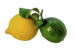 Cal verde fresco e limão amarelo Fotografia de Stock Royalty Free