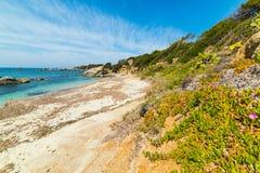 Cala Caterina海岸线春天 免版税库存照片