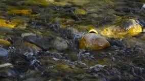 Cala clara del agua de la corriente que fluye sobre el vídeo de la roca del río almacen de video