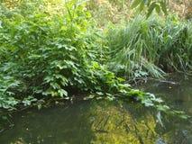 Cala con las piedras y el verdor, naturaleza hermosa del verano libre illustration