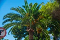 Cala d& x27; Eller Mallorca Royaltyfri Foto