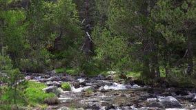 Cala de abundancia de la montaña de una montaña de los Pirineos en España, cantidad de la cámara lenta metrajes