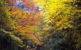 Cala de Akame en Nabari, Mie, Japón Foto de archivo