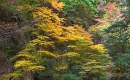 Cala de Akame en Nabari, Mie, Japón Fotografía de archivo libre de regalías