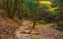 Cala de Akame en Nabari, Mie, Japón Foto de archivo libre de regalías
