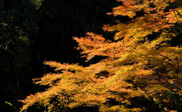 Cala de Akame en Nabari, Mie, Japón Fotos de archivo libres de regalías