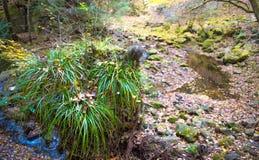 Cala de Akame en Nabari, Mie, Japón Fotos de archivo