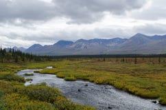 Cala de Alaska de la tundra Imagen de archivo