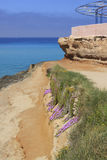 Cala de Comte, Ibiza Royaltyfri Bild
