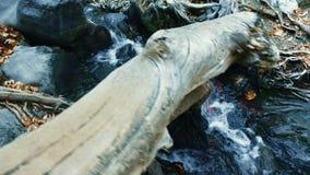 Cala de la montaña con agua clara en reserva de naturaleza del otoño Agua de manatial fresca metrajes