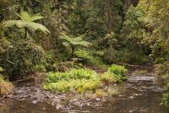 Cala de la selva Fotografía de archivo libre de regalías