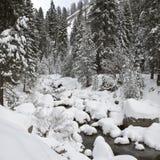Cala del bosque en invierno en el parque nacional de secoya Fotos de archivo libres de regalías