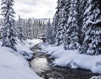 Cala del invierno Imágenes de archivo libres de regalías