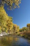 Cala del otoño Foto de archivo libre de regalías