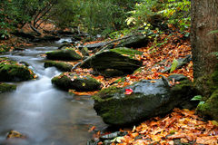 Cala del otoño imagenes de archivo