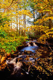 Cala del otoño Imagen de archivo
