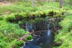 Cala en bosque Fotografía de archivo