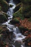 Cala en bosque Fotografía de archivo libre de regalías